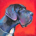 Great Dane Painting by Svetlana Novikova