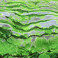 Green Algae Patterns On Exposed Rock At Low Tide, Gros Morne National Park, Ontario, Canada by Altrendo Nature