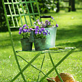 Green Garden Chair by Sandra Cunningham