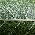 Green Leaf Geometry by Ryan Kelly