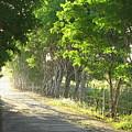 Green Path by Barbara Marcus
