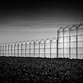 Greenhouse by Dave Bowman