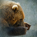 Grizzly Bear Lying Down by Betty LaRue