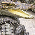Group Of Crocodiles by Jorgo Photography - Wall Art Gallery