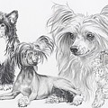 Growing Up Chinese Crested And Powderpuff by Barbara Keith