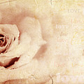 Grungy Rose Background by Anna Omelchenko