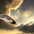 Gull With Approaching Storm by Meirion Matthias