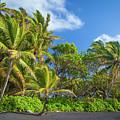 Hana Palm Tree Grove by Inge Johnsson