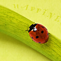 Happiness by Angela Doelling AD DESIGN Photo and PhotoArt