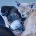 Harmony by Donna Tuten