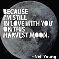 Harvest Moon by Cindy Greenbean