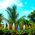 Hawaii Surfboard Fence Photograph  by Michael Ledray
