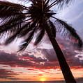 Hawaiian Coconut Palm Sunset by Dustin K Ryan