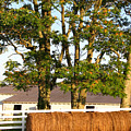 Hay Bales And Trees by Todd A Blanchard