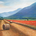 Haybales In Italy by Ann  Cockerill