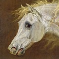 Head Of A Grey Arabian Horse  by Martin Theodore Ward