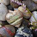 Heart Stone With Wild Flower by Garry Gay