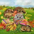 Hedgehogs Inside Scarf by EB Watts
