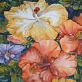 Hibiscus by Diane Ziemski