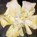Hibiscus Jaune by Muriel Dolemieux