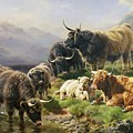 Highland Cattle by William Watson