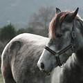 Horse by Saulgranda