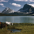 Horses Graze In A Lakeside Meadow by Walter Meayers Edwards