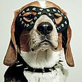 Hound In Black Mask by Darren Boucher