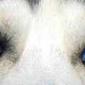 Husky Eyes by Jane Schnetlage