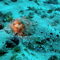 Illuminated Eye Of A Common Cuttlefish by Sami Sarkis