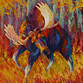 Imminent Charge - Bull Moose by Marion Rose