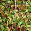 In The Fall by Deborah Montana