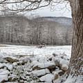 In The Field by Bill Wakeley