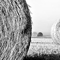 In The Hay -black And White by Dana Walton