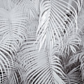 Infrared Palm Abstract by Adam Romanowicz
