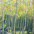 Into The Aspens by Mary Benke