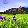Iris And Flatirons by Scott Mahon