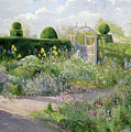 Irises In The Herb Garden by Timothy Easton