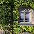 Ivy League by John Greim