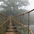Jungle Journey 2 Print by Skip Nall