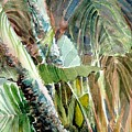 Jungle Light by Mindy Newman