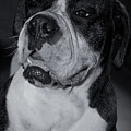 Just Handsome II by DigiArt Diaries by Vicky B Fuller