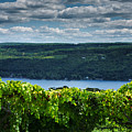 Keuka Vineyard I by Steven Ainsworth