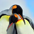King Penguin by Tony Beck