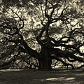 Last Angel Oak 72 by Susanne Van Hulst