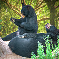 Laughing Bears by John Haldane