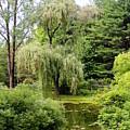 Lazy Pond by Deborah  Crew-Johnson