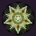 Leafy Mandala by Rene Crystal