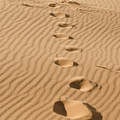 Leave Only Footprints by Heather Applegate