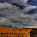 Leaving The Shed by David Patterson
